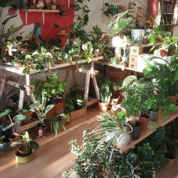 plantenkamer